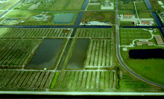 Nursery Acreage-Wellington-Florida